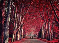 优美的森林风景图片大全壁纸