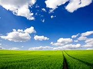 绿色草原风景壁纸清新护眼