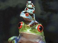 青蛙曰 站的高望的远