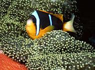 海底世界里那五颜六色的海洋生物