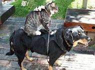 可爱狗狗搞笑图片之吉祥如意的一家