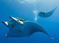 深海底浪漫唯美海洋风景图