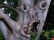 这棵树到底经历了些什么