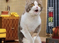 雷人的猫咪爆笑图片