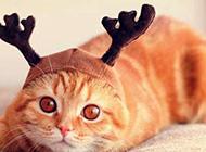 可爱猫咪卖萌超清大图