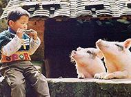人和动物恶搞图片之音乐爱好者