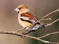 麻雀白鹤鸟类动物图片合集