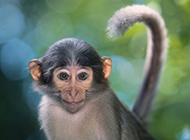 树林小猕猴图片特写欣赏