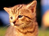 超萌好奇小猫咪高清壁纸