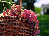 鲜甜多汁的葡萄水果图片精美壁纸