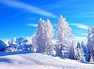 冬季唯美自然森林草原雪白美景高清图