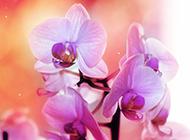 自然清新鲜花高清摄影