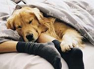 可爱懒洋洋的狗狗图片