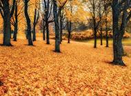 秋天树林山川风景图片壁纸