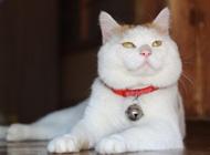 超酷的猫宝贝高清图片