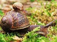 大自然野生动物可爱搞怪美图