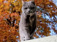 高贵猫咪超萌宠物高清组图