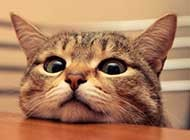 可爱乖巧的萌猫精选桌面壁纸