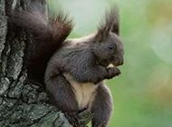 身手敏捷的可爱小松鼠高清壁纸