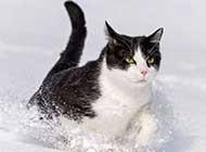 带有神秘气息的小黑猫高清动物壁纸
