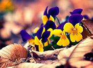 漂亮的秋天花卉植物高清图片