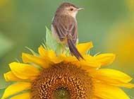 可爱活泼的小鸟高清图集赏析