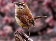 轻盈小巧的鸟类摄影高清图片