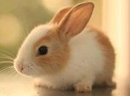 乖巧可爱兔子萌萌哒美图
