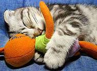猫咪奇葩睡觉图片惹人笑