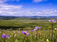 若尔盖草原美丽风景图片高清壁纸