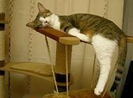 猫咪睡觉搞笑的图片之高超的睡姿