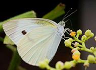 美丽蝴蝶图片优雅静谧