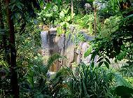 马达加斯加丛林自然风景图片