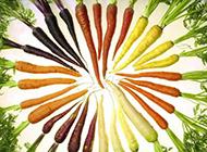 营养蔬菜胡萝卜唯美高清图片欣赏
