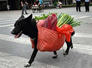 爆笑狗狗图片之买菜