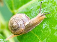 努力向上爬行的小蜗牛图片