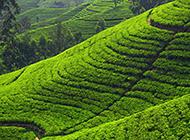 广西桂林龙脊梯田风景高清图片