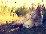 精选唯美动物高清图片