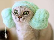 可爱呆萌猫咪搞怪精选图集