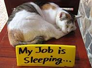 搞笑动物睡觉图片之轻松的工作