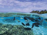 海洋浅水鱼类图片