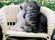 动物世界可爱卖萌高清精美图集