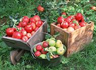 美味诱人的苹果高清唯美图片欣赏
