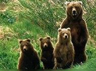 动物世界超有爱亲子照