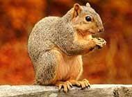 唯美松鼠高清写真图片
