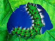 可爱的毛毛虫图片高清电脑桌面壁纸