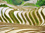 广西龙脊梯田自然风光图片