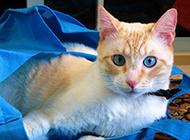 调皮机灵的猫咪高清图片