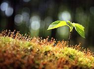 大森林绿色风景图片高清壁纸