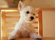 萌萌哒的可爱小狗高清图集